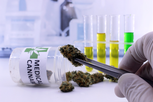Researchers Review Cannabis-Based Therapies for Epilepsy, Dravet Syndrome